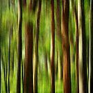 Rainforest by Kitsmumma