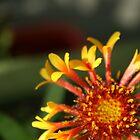 fire flower by Jodie Doyle