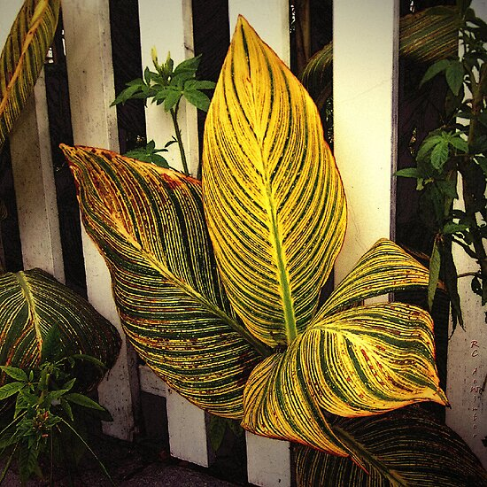 Exotica Nova Angliae by RC deWinter
