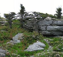 Outcropping of Rocks @ Grandfather mnt. by dstorm31