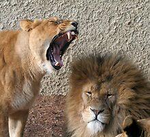 Wakey Wakey by safari23