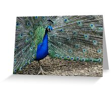 Peacock Blue Greeting Card