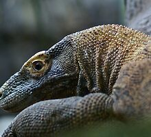 Komodo Dragon by Themossgirl