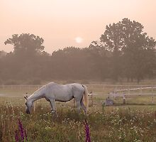 Whitehorse by TomSpencer
