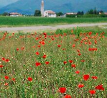 Poppy Field by jojobob