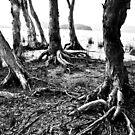 Twisted roots by Alexander Meysztowicz-Howen