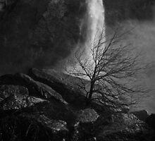 Bare Tree at Yosemite Falls by Bob Reagan