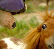 What happens when a horse frightens a horse? by Ajmdc