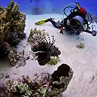 Diver with a lionfish, Red sea by Aziz T. Saltik