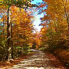 Autumn Country Road by Molly  Kinsey