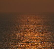 bird silhouetted against sunset by vkirbys