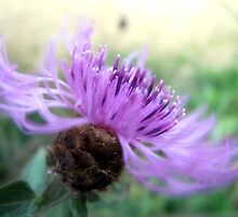 Wild Thistle in the Wind by Pamela Jayne Smith