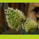 Macro: Beautiful  Nature - 12 by houk