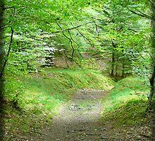 Cawdor Castle Path by Aekisra