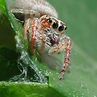 Jumping Spider #2 by John Martin