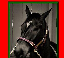 HORSE FACE BLACK & WHITE CHRISTMAS CARD - MERRY CHRISTMAS by Cheryl Hall