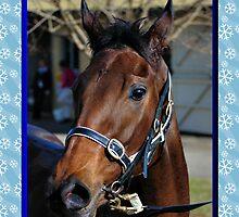 HORSE CHRISTMAS CARD - MERRY CHRISTMAS by Cheryl Hall