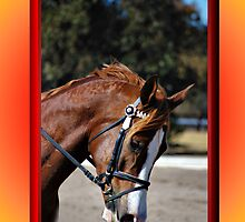 HORSE FACE PROFILE CHRISTMAS CARD - CHRISTMAS GREETINGS CARD by Cheryl Hall