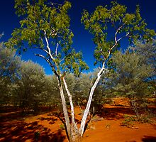 Ghost Gum Surrounded by Mulga by Douglas JD Rodgers