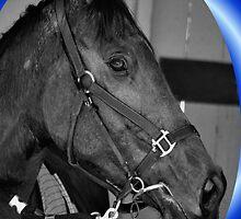 HORSE CHRISTMAS CARD BLUE - MERRY CHRISTMAS by Cheryl Hall