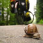 March: A snail's pace - Champagne, France by cyclenavigator