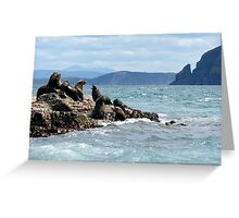 Australian fur seals, Bruny Island Greeting Card