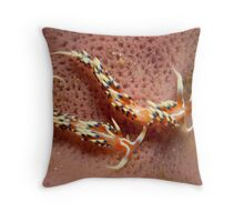 Phidiana indica, North Sulawesi, Indonesia Throw Pillow