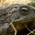Toad sitting in the grass by angellynnhill