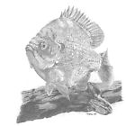 Bluegill by timoteo