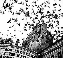 pigeons by Brandon Myles Osman