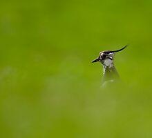 Bird-watching by Gabor Pozsgai