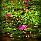 Waterlily Paradise by Elaine Short