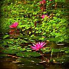 Waterlily Paradise by Elaine Short