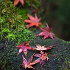 Patterned leaves 3 by Jenny Hall