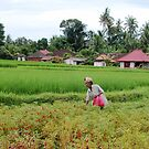 FIELDS OF BALI by mc27