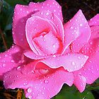 Rain Drops and Roses. by Gabrielle  Hope