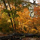 Lost Maples by fatdogcreatives