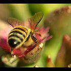 busy bee by tienpa