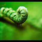 fern unfurling by tienpa