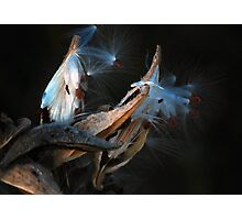 Discovery Photographic Print