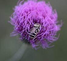 Fuzzy Nest by LauraBroussard