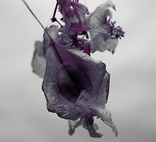 Dry flower 4 by FotosdaMau