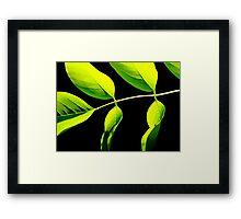 Acacia Framed Print