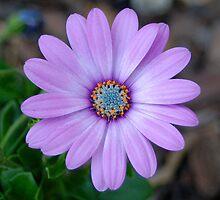 Purple Flower - Stockley Gardens Park by joelcohenart