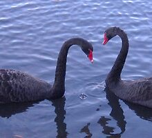 Black Swans in Love by joelcohenart