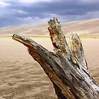 Great Sand Dunes Log by Jimlhanson