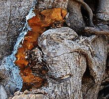 Tree Bark with Character by Ralph Angelillo