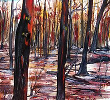 Australian Bushfire - Regeneration - Trees by © Linda Callaghan