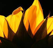 ~golden petals~ by Terri~Lynn Bealle