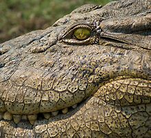 Nile Crocodile by Neville Jones